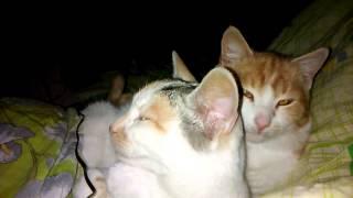 Кошки в постели