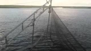 Shrimping on the Bayou, Grand Bayou Village, Plaquemines Parish, Louisiana