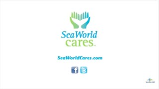 SeaWorld Returns 15 Sea Lions to the Ocean | SeaWorld®