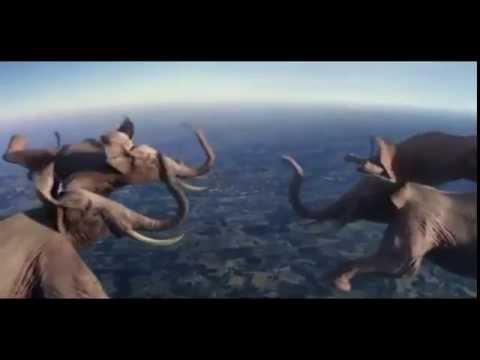 Amazing elephant fly