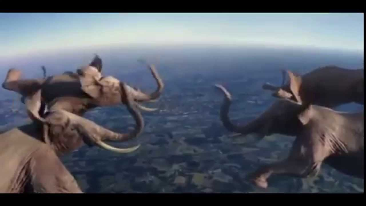 Amazing elephant fly - YouTube