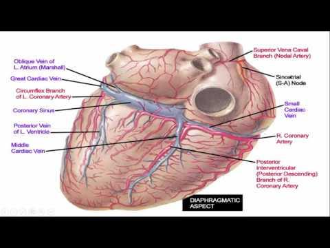 Beste vaten deel 1 hart - YouTube JT-88