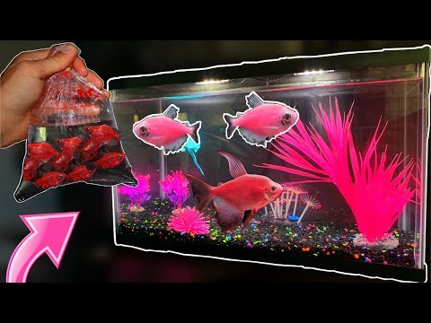 Buying *ALL PINK* GloFish!