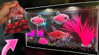 new-all-pink-glofish-tank-crazy