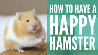 how to have a HAPPY hamster