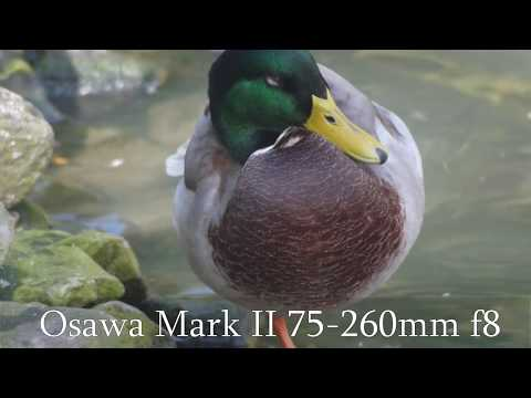 Osawa: My Favorite $1 Lens - Description And Samples