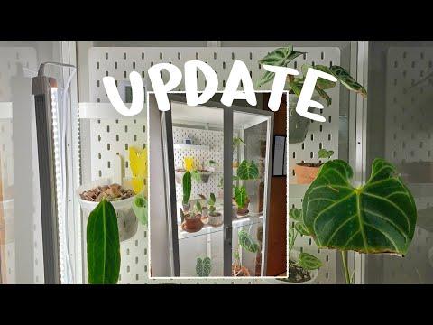 IKEA Greenhouse Update! Adding lil shelves, + making it better hehe