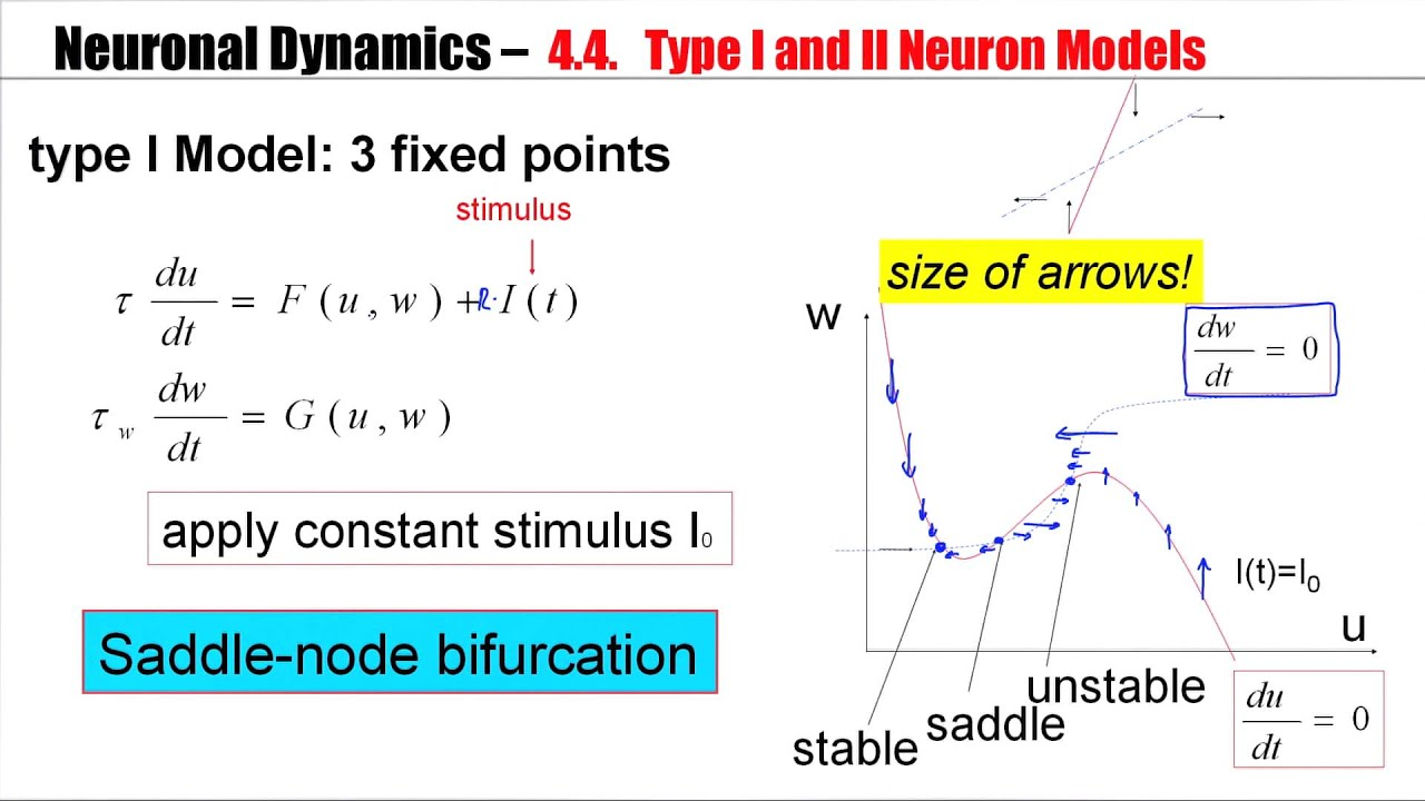 Neuron diagram and models auto electrical wiring diagram 4 4a type i and type ii neuron models youtube rh youtube com diagram of a neuron synapse blank neuron diagram ccuart Image collections