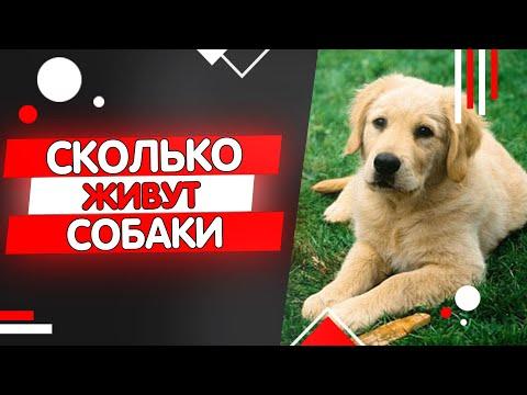 Сколько живут собаки, продолжительность жизни собак.