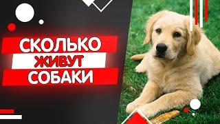 сколько живут собаки, продолжительность жизни собак