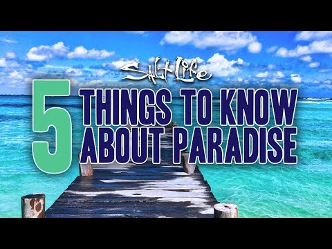 5 Things to know about Paradise | Salt Life