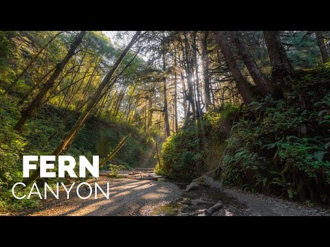 Fern Canyon Hike in Redwoods National Park