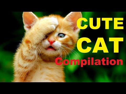 Best Cute Cat Compilation Ever !!!