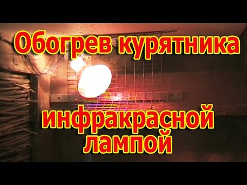 Видео Обогрев курятника инфракрасной лампой // Приобретение кур несушек