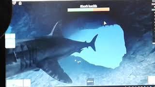 The shark comes!!! (Roblox shark bite
