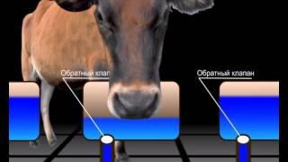 видео Поилки и кормушки для коров своими руками