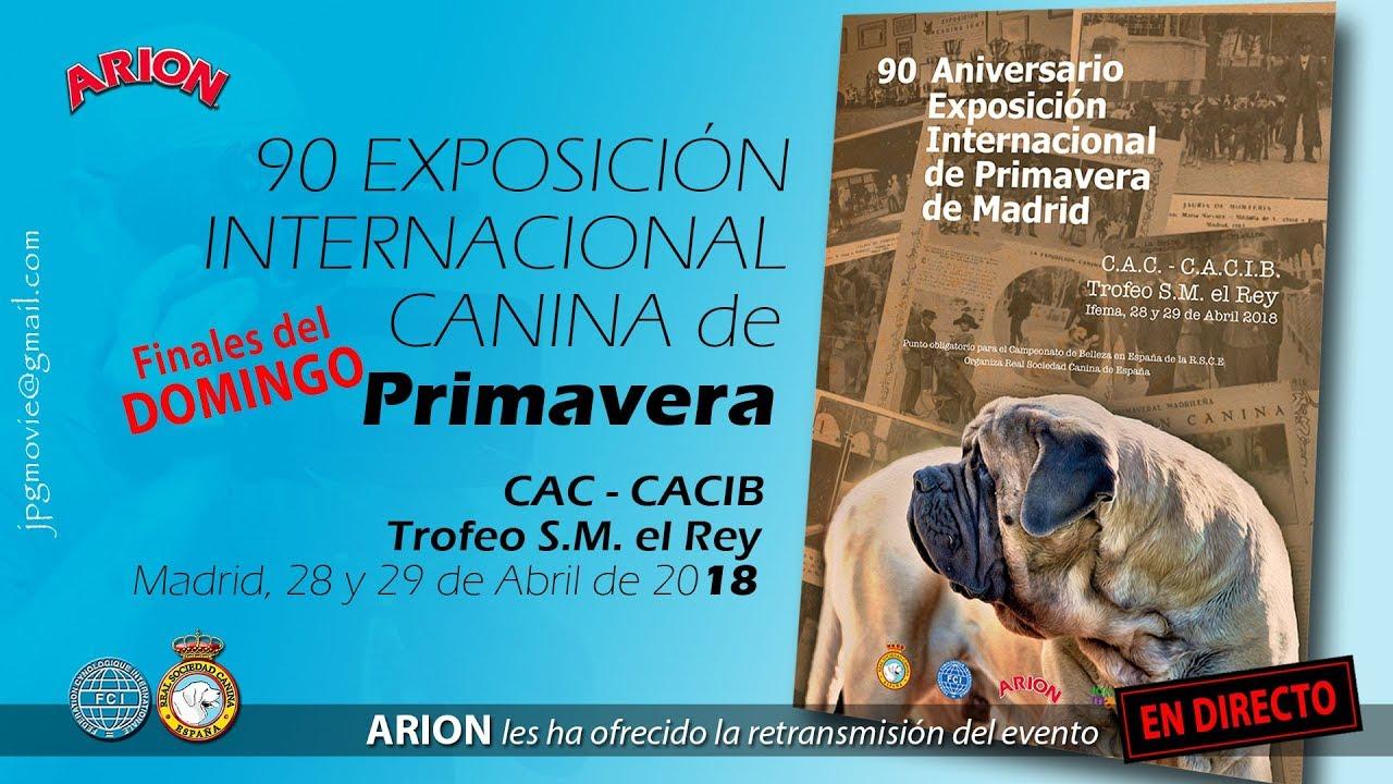 90 Exposición Internacional Canina de Primavera. Madrid 2018