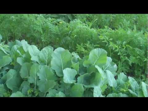 Eastern Washington Homestead - Greens - L2Survive with Thatnub