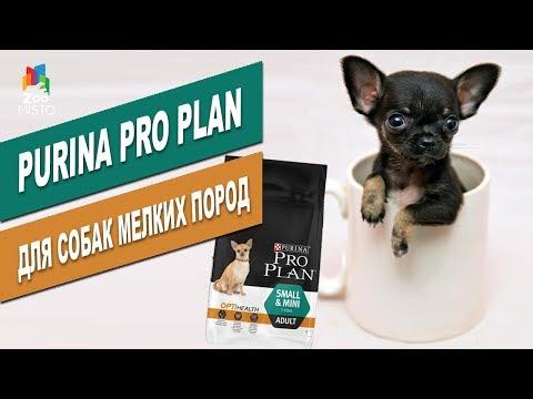 Pro Plan для собак мелких пород | Обзор корма для собак мелких пород Dog Food For Small Dogs Review