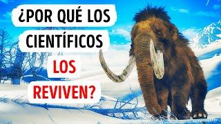 Es probable que veas mamuts vivos en el futuro cercano