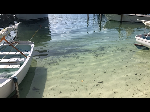 Underwater Livestream with a Sleeping Shark in Bahamas (iPhone 7+)