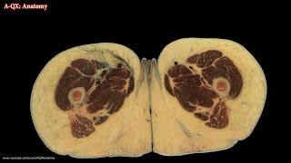 Female Reproductive Organs / Женские половые органы - половая система.