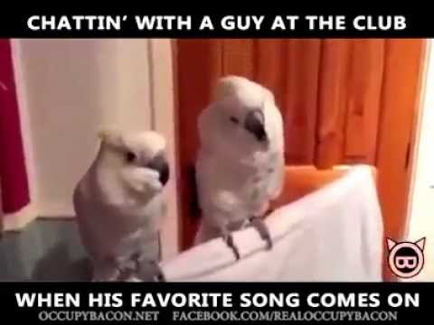 hqdefault funny dancing parrot when the music drops! youtube