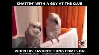 Funny Dancing Parrot When the music drops!