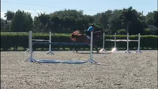 At Home with Glenbeigh Farm | Turning into a Combination | Show Jumping Training Tips