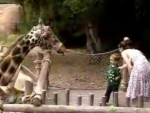 Thumbnail: Sneaky Giraffe Startles Zoo Visitors
