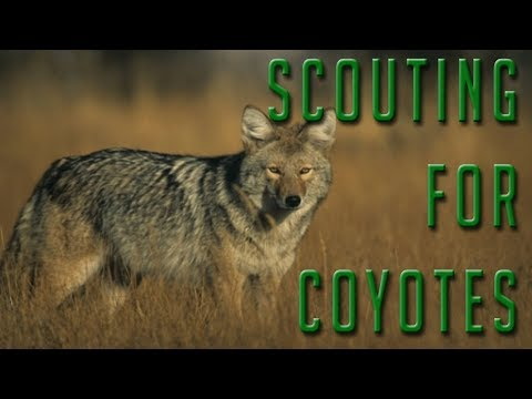 Five Tips For Finding New Spots To Coyote Hunt!