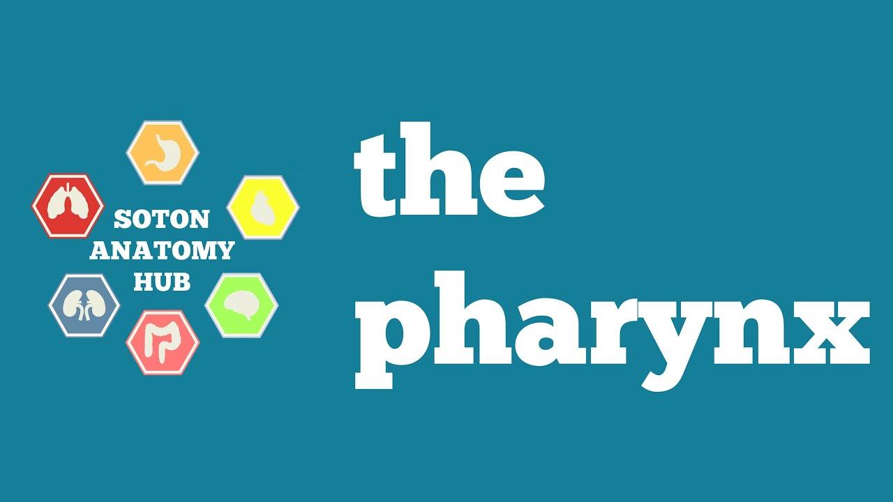 The Anatomy Of The Pharynx Youtube