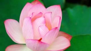 東京エスムジカのアルバム「World Scratch」より「泥の花」です。 アコ...