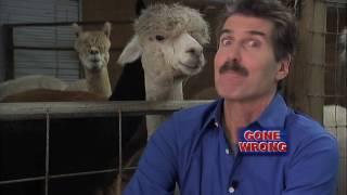 Alpacas and Taxes