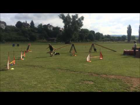 Sheltie Nessie & agility camp OPSION
