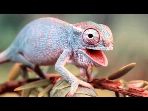 Осьминог хамелеон - Видео приколы