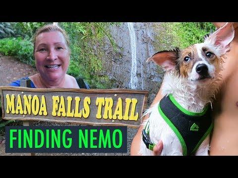 Finding Nemo, Fish Pedicure, Hike to Manoa Falls in Hawaii