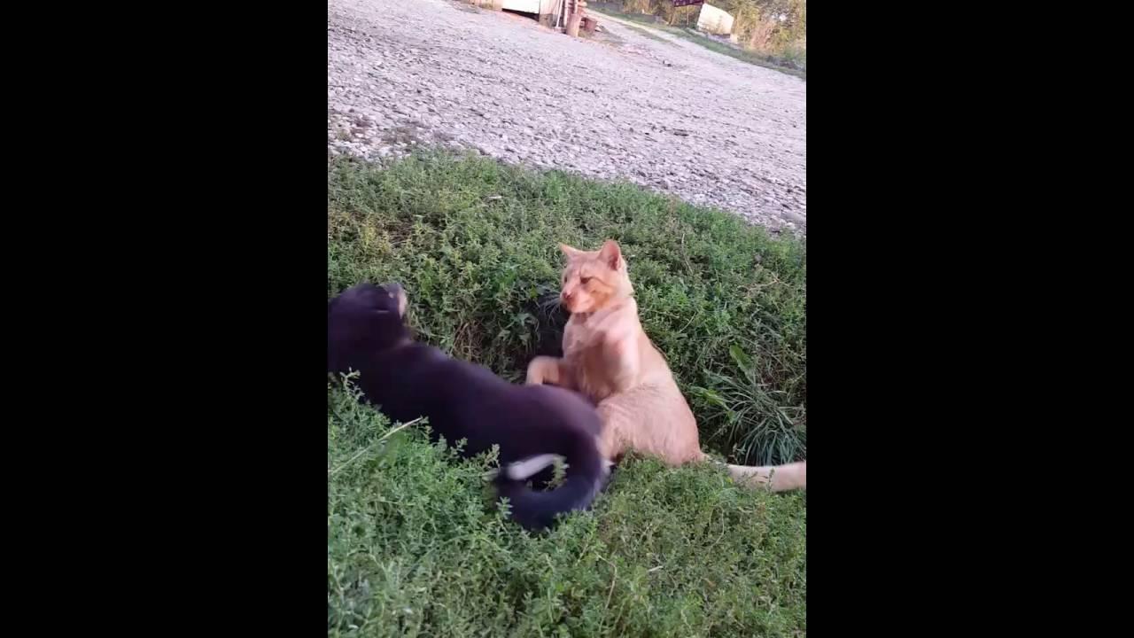 Faze comice cu animale 2016