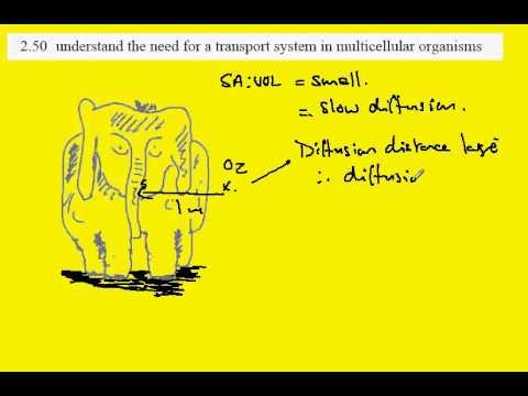2.50 Transport systems in multicellular organisms