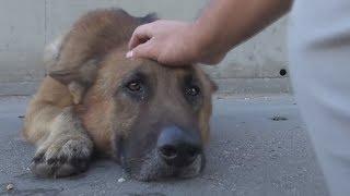 Парень просто погладил собаку по макушке, но то что сделал пёс никто не ожидал