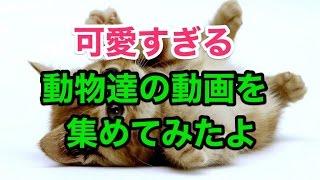 【関連動画】 ・超笑えるwww おもしろ猫動画 総集編 Funny Cats Comp...
