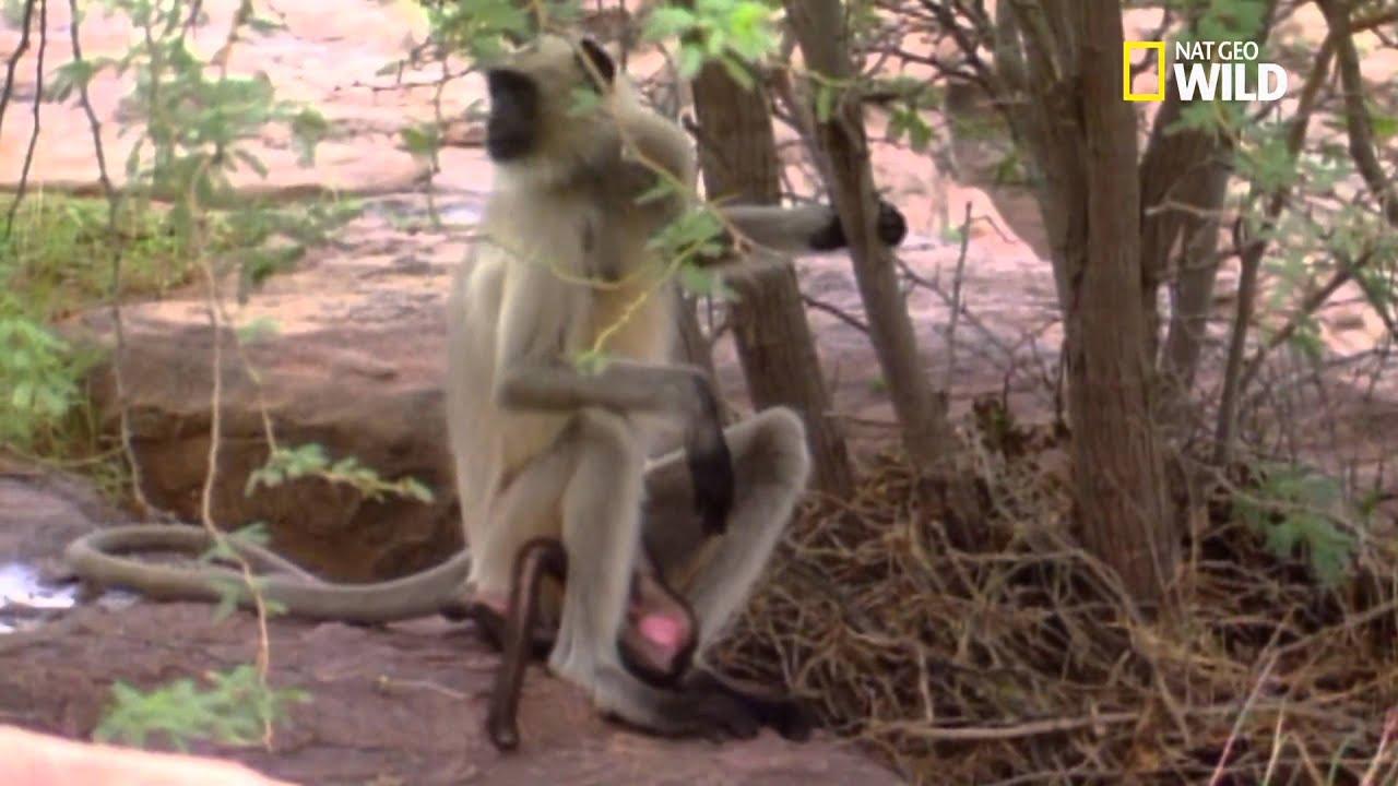 Garderie brutale pour ce bébé singe