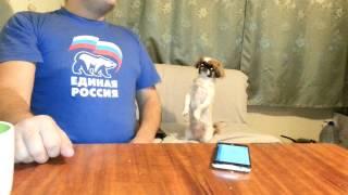 Собака - патриот , гимн России.