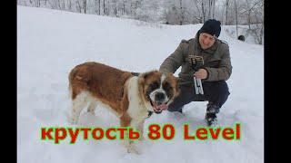 Самая крутая сторожевая собака в мире Московская сторожевая