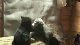 Черная кошка и Серый кот 2