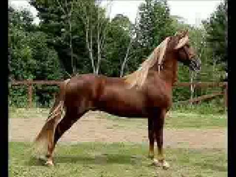 Horse breeds of the united states most popular breeds youtube