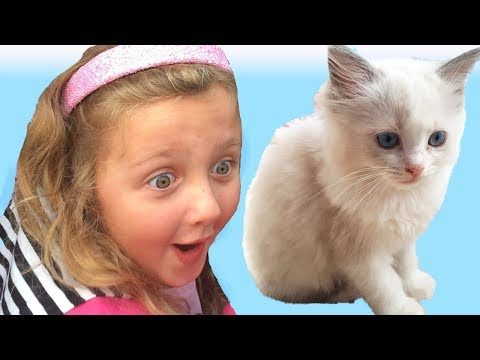 Little Kitten My Favorite Cute Cat - Play Fun Pet Care Game with Children THIS MADE HER CRY!!