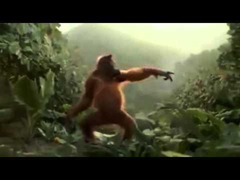 Scimmia Divertente Che Balla Youtube