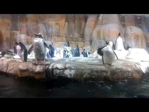 Trip to Omaha Nebraska Zoo!