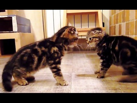 The cutest Assassin's Kittens  | Funny Cats